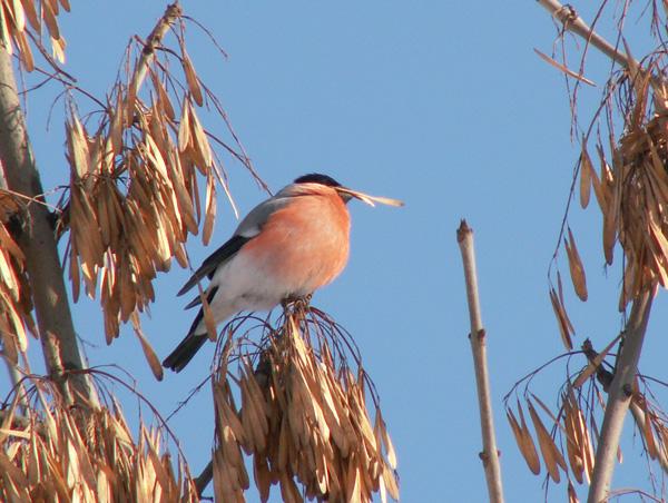 Зимующие птицы.