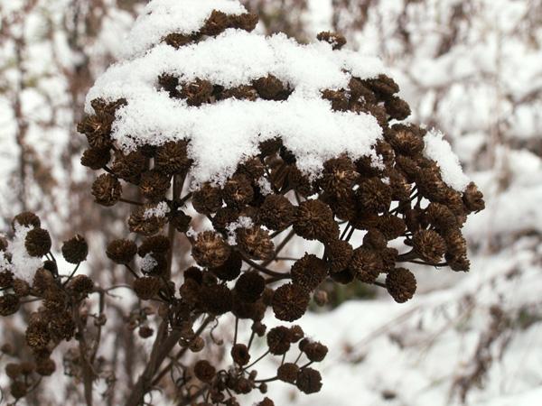 А в глубине леса настоящая зима и