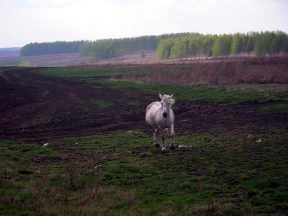 ЛЕСОКРУТ. Бодливый конь