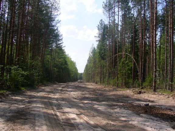 ЛЕСОКРУТ. Тащиловский тракт