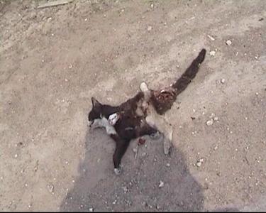 Кошак-Шмяк!