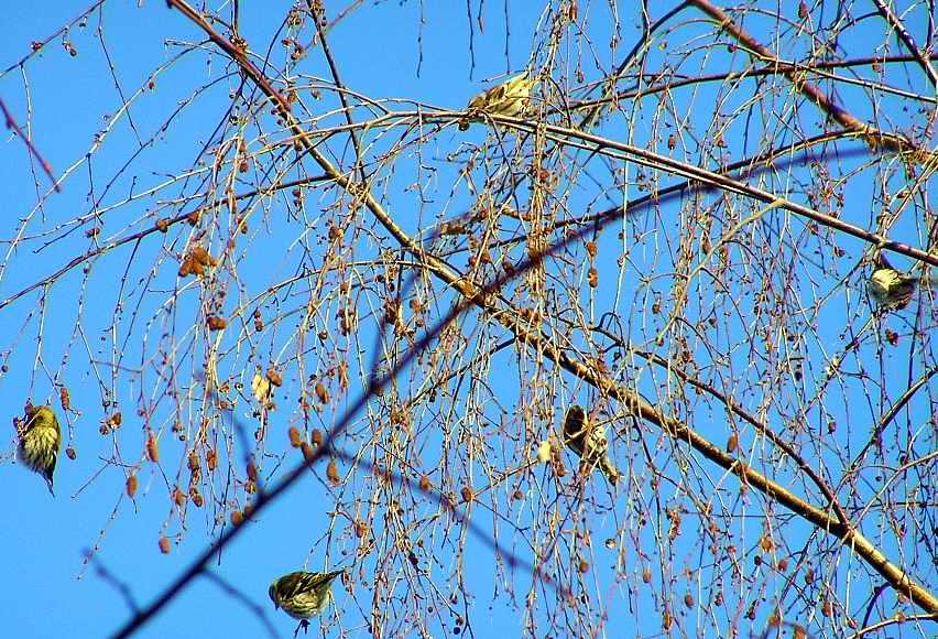 сочинение тему птицы